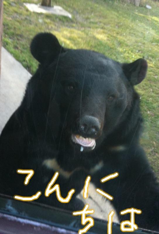 八木山動物園の年間チケット
